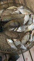 Мои рыбалки - рыб.JPG
