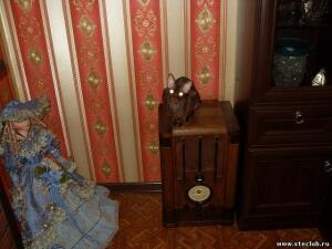 Фото наших домашних питомцев. и не только наших  - 2058410.jpg