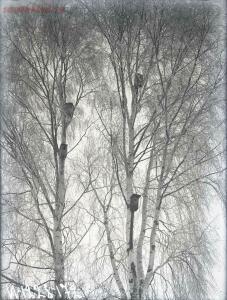 Уходящая натура на снимках Александра Антоновича Беликова 1925 год - 15a598c6e4fb.jpg