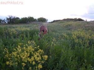 Прогулка с МД на природе. - SAM_0280.jpg