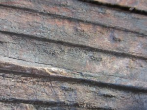 Окаменелая флора Палеозоя - IMG_3376.JPG