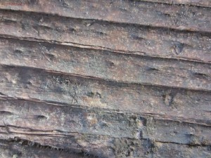 Окаменелая флора Палеозоя - IMG_3381.JPG
