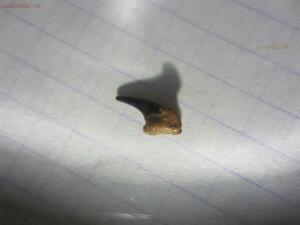 Окаменелая флора Палеозоя - IMG_6232.JPG