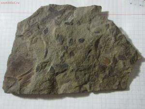 Окаменелая флора Палеозоя - IMG_6087.JPG
