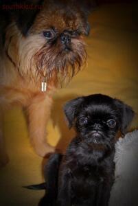 Фото наших домашних питомцев. и не только наших  - DSC_0067a.JPG