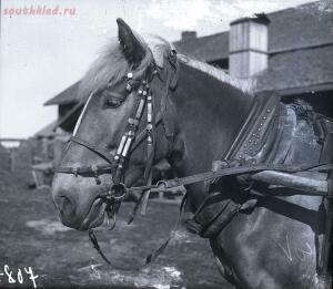 Уходящая натура на снимках Александра Антоновича Беликова 1925 год - 07949ca54d3f.jpg
