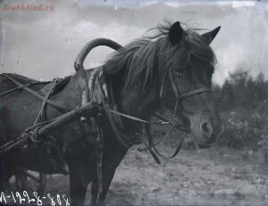 Уходящая натура на снимках Александра Антоновича Беликова 1925 год - 7725fe1d0e87.jpg