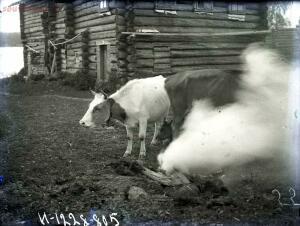 Уходящая натура на снимках Александра Антоновича Беликова 1925 год - 31940c422fd7.jpg