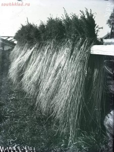 Уходящая натура на снимках Александра Антоновича Беликова 1925 год - 9f9f6070fb9b.jpg