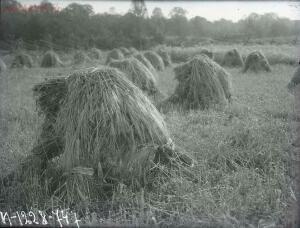 Уходящая натура на снимках Александра Антоновича Беликова 1925 год - 35aa6631a715.jpg
