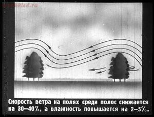Сталинский план преобразования природы - 24-tv6ZIhO_97c.jpg