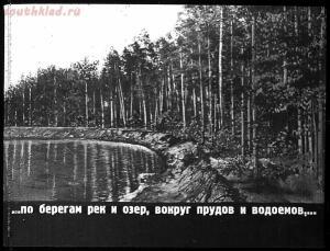 Сталинский план преобразования природы - 38-WocdlgKDnG0.jpg