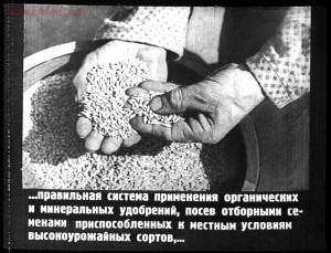 Сталинский план преобразования природы - 41-e3DrFjjoINk.jpg