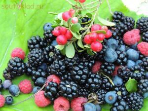 Лесные ягоды - разнообразие рациона - lIUOU8QwXRE.jpg