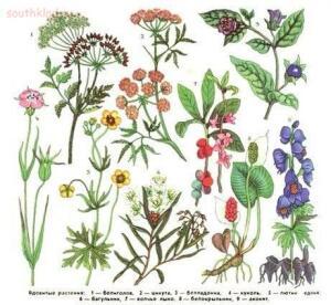 Смертельно-ядовитые растения России, и первая помощь  - 80oeoWj78d8.jpg