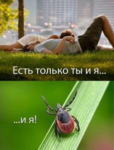Ранняя весна - злые клещи  - QAnspwqjAmE.jpg