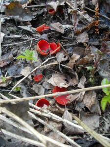 кто знает,что за грибы? - DSCN2816.JPG