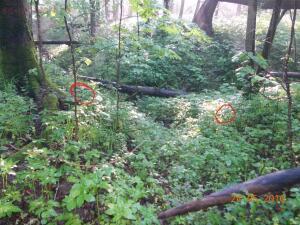 в указанных местах найдены кресты, подвес так и не нашёл  - DSCN2865.JPG