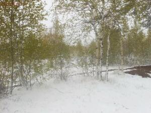 Первый день лета этого года...метель и снег... - первый день лета.jpg