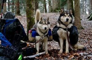 В поход с собакой. Все что нужно знать хозяевам - jtRrkx9v_z4.jpg