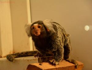 Выставка обезьян... и других пресмыкающихся - DSC_0115.JPG