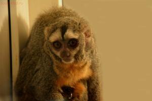 Выставка обезьян... и других пресмыкающихся - DSC_0122.JPG