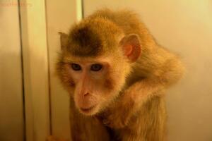Выставка обезьян... и других пресмыкающихся - DSC_0125.JPG
