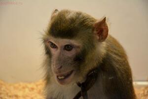Выставка обезьян... и других пресмыкающихся - DSC_0140.JPG