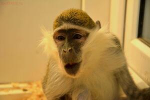Выставка обезьян... и других пресмыкающихся - DSC_0251.JPG