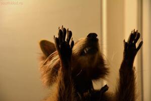 Выставка обезьян... и других пресмыкающихся - DSC_0274.JPG