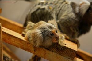 Выставка обезьян... и других пресмыкающихся - DSC_0292.JPG