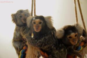 Выставка обезьян... и других пресмыкающихся - DSC_0294.JPG