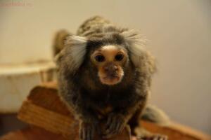 Выставка обезьян... и других пресмыкающихся - DSC_0296.JPG