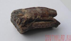 Фотогафии окаменелостей - 11_cr.jpg