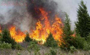 Как спастись в лесу от пожара:правила безопасности в лесу. - 83958396_0.jpg