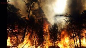 Как спастись в лесу от пожара:правила безопасности в лесу. - lesnie-pozhari-v2.orig.jpg