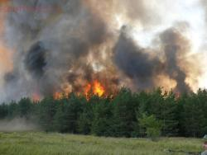 Как спастись в лесу от пожара:правила безопасности в лесу. - P1090906-1024x768.jpg