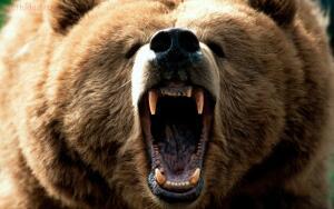 Что делать если вы встретили медведя? - EyfnkfwLZC0.jpg