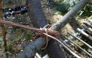 Веревка из елового корня - k255SU7RzLg.jpg