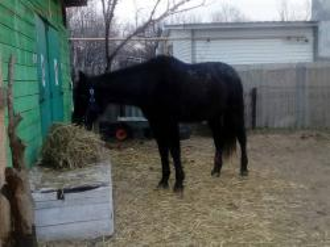 Фото наших домашних питомцев. и не только наших  - ..конь.jpg