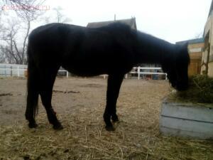 Фото наших домашних питомцев. и не только наших  - ....конь..jpg