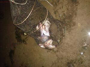 Рыбалка от Сереги ... - 20160809_022631.jpg