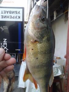 Рыбалка от Сереги ... - 20160912_175809.jpg