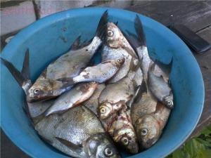Рыбалка от Сереги ... - 1419177930_14.jpg