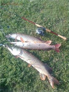 Рыбалка от Сереги ... - f6eabd2db294.jpg