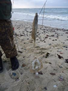 Рыбалка от Сереги ... - DSC01751.JPG