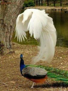 Невероятные фотографии, сделанные без использования фотошопа - 1488560713_foto-bez-fotoshopa-12.jpg
