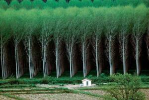 Невероятные фотографии, сделанные без использования фотошопа - 1488560738_foto-bez-fotoshopa-32.jpg