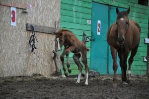 Фото наших домашних питомцев. и не только наших  - конь.jpg