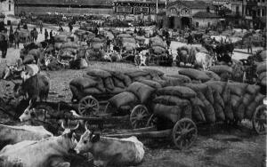 МОЛОДАЯ РОССИЯ ...По страницам National Geographic от 1914 г - 9.jpg